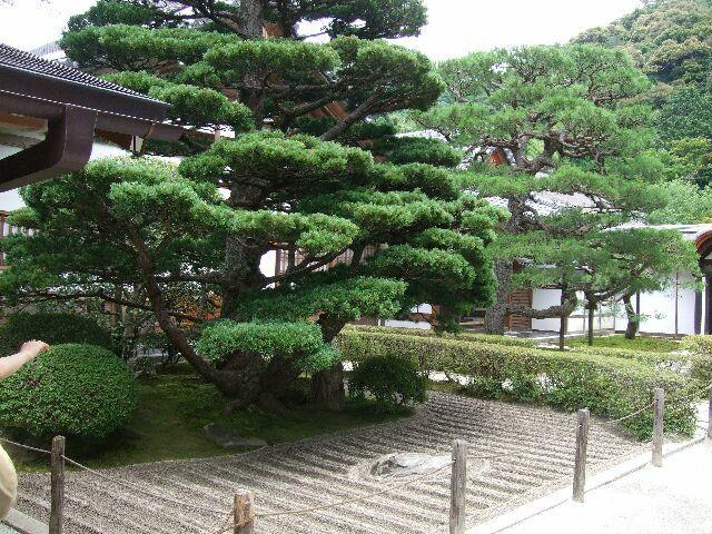 銀閣寺 庭 No.2