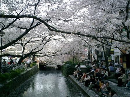 桜の季節でした