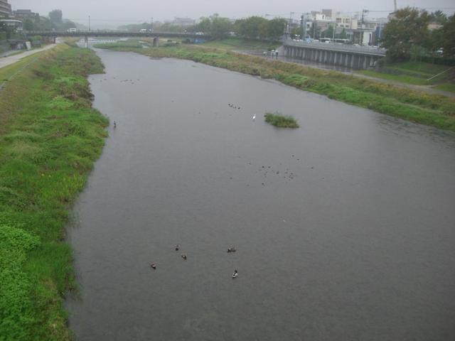 御池大橋から見た鴨川