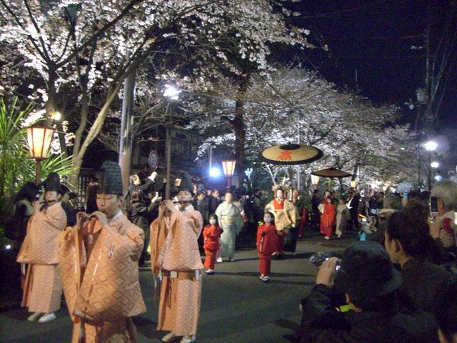 ライトアップされた桜と太夫の道中が古の京都をふつふつと