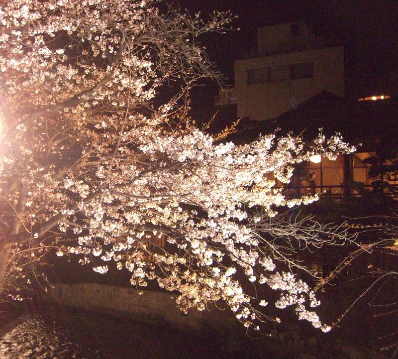 桜の花越に宴席が
