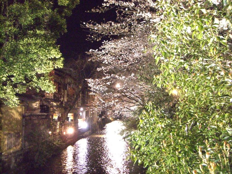 京都のお花見ならここは必見