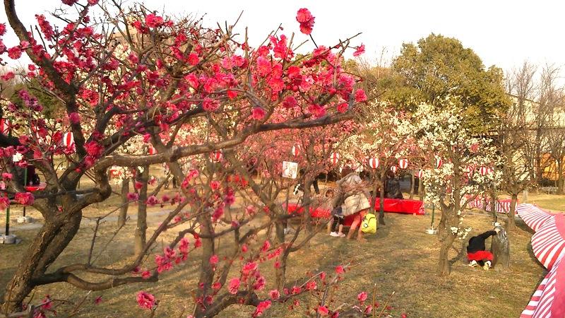 梅の花には白も赤もあって